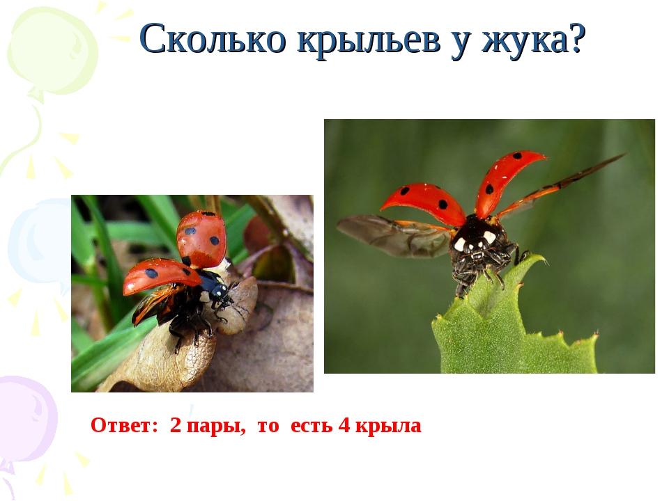Сколько крыльев у жука? Ответ: 2 пары, то есть 4 крыла