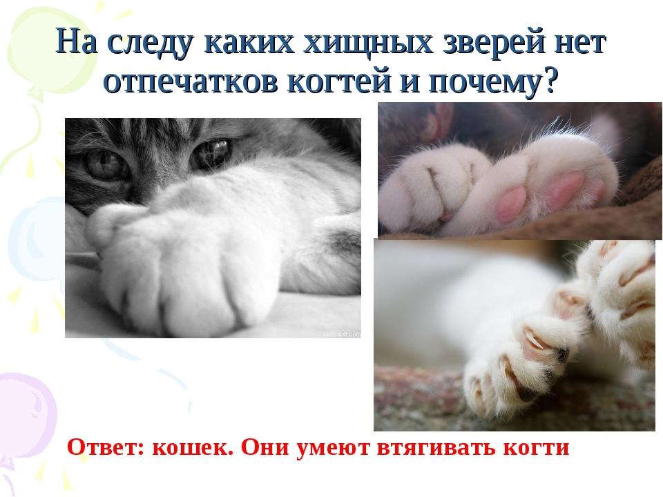 На следу каких хищных зверей нет отпечатков когтей и почему? Ответ: кошек. Он...