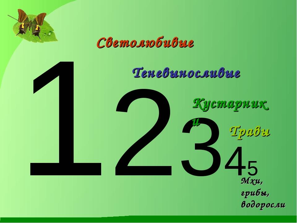 12345 Светолюбивые Теневыносливые Кустарники Травы Мхи, грибы, водоросли