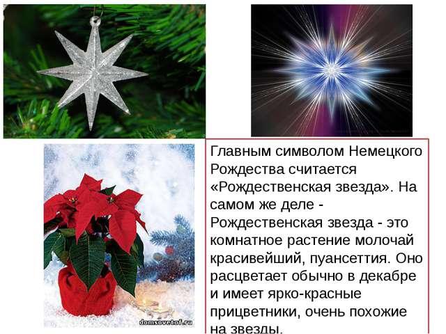 Главным символом Немецкого Рождества считается «Рождественская звезда». На са...
