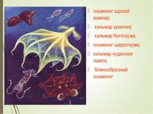 осьминог адский вампир; кальмар кранхия; кальмар батотаума; осьминог цирротау