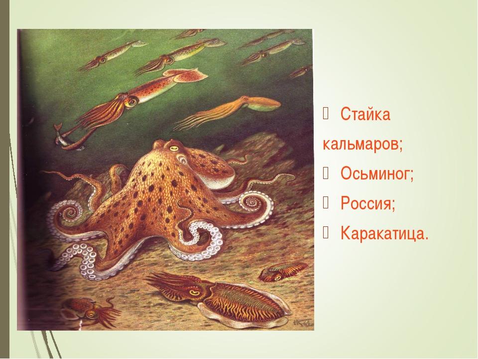 Стайка кальмаров; Осьминог; Россия; Каракатица.