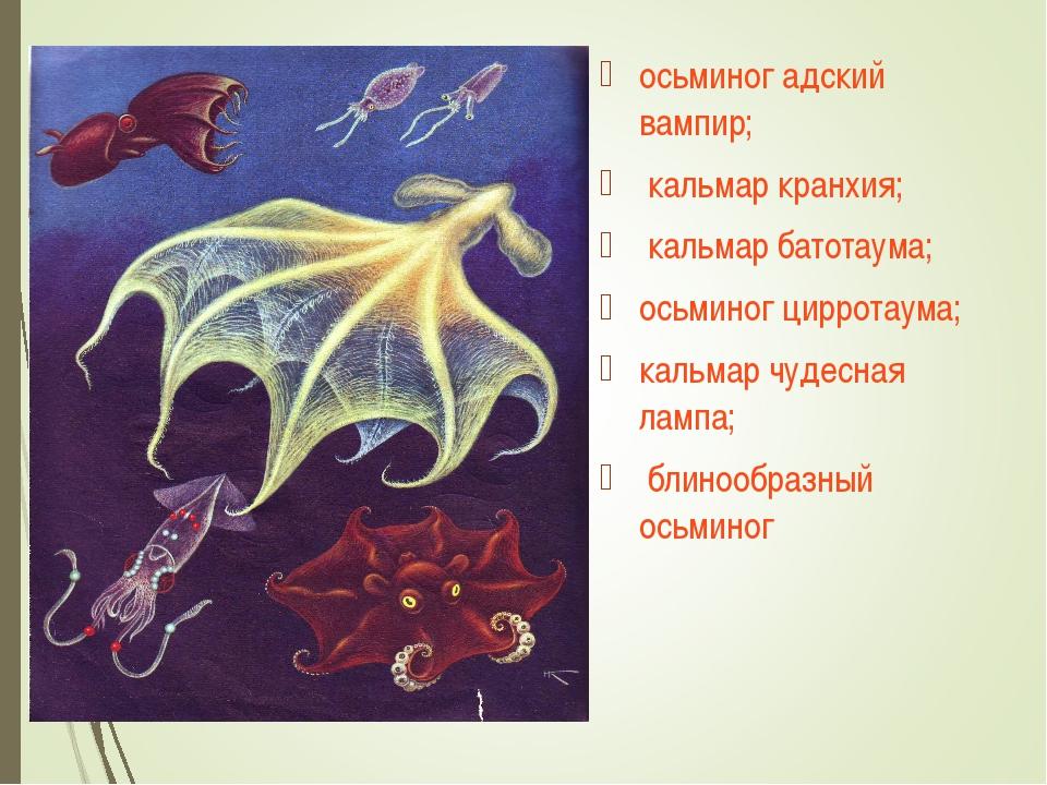 осьминог адский вампир; кальмар кранхия; кальмар батотаума; осьминог цирротау...