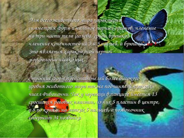 Для всего животного мира характерны симметрияформ и наличие парных органов,...
