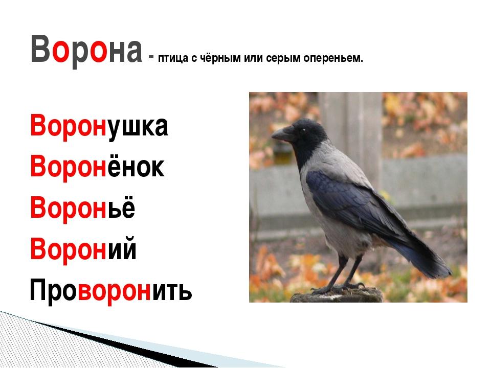 Воронушка Воронёнок Вороньё Вороний Проворонить Ворона - птица с чёрным или с...