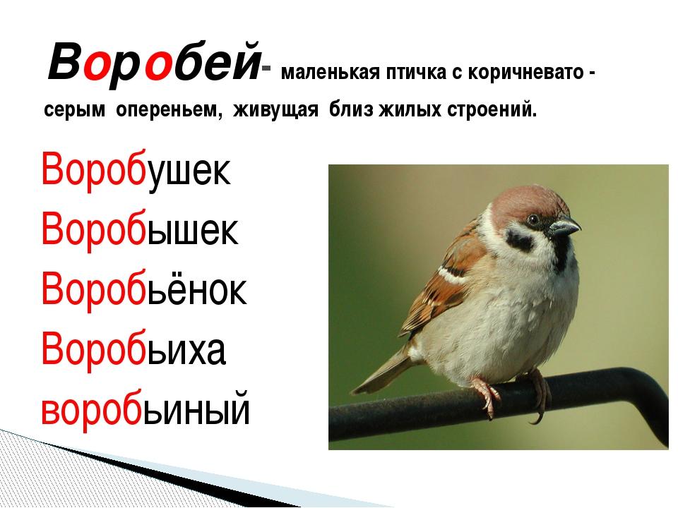 Воробушек Воробышек Воробьёнок Воробьиха воробьиный Воробей- маленькая птичка...