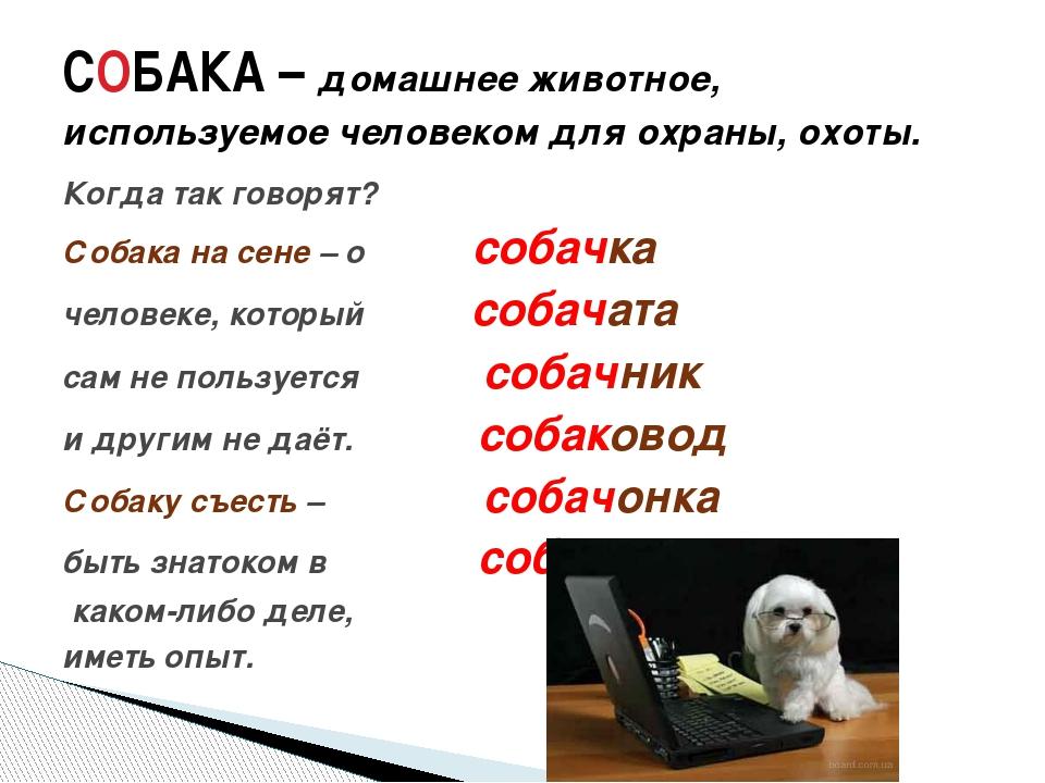 Когда так говорят? Собака на сене – о собачка человеке, который собачата сам...