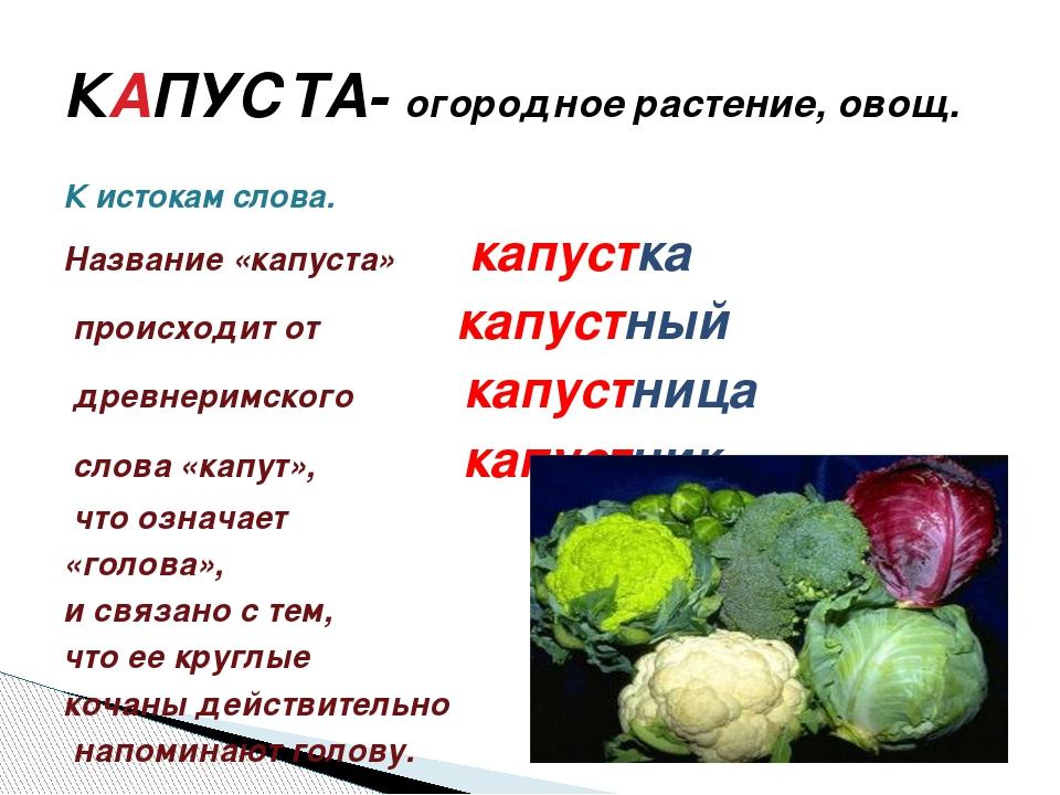 К истокам слова. Название «капуста» капустка происходит от капустный древнери...