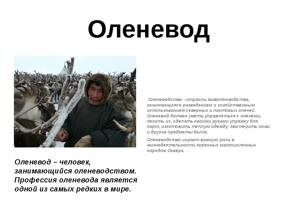 Оленевод Оленеводство - отрасль животноводства, занимающаяся разведением и хо...