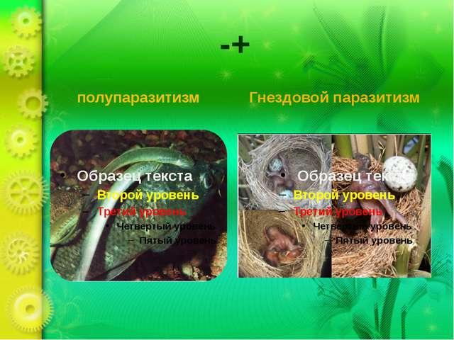 -+ полупаразитизм Гнездовой паразитизм