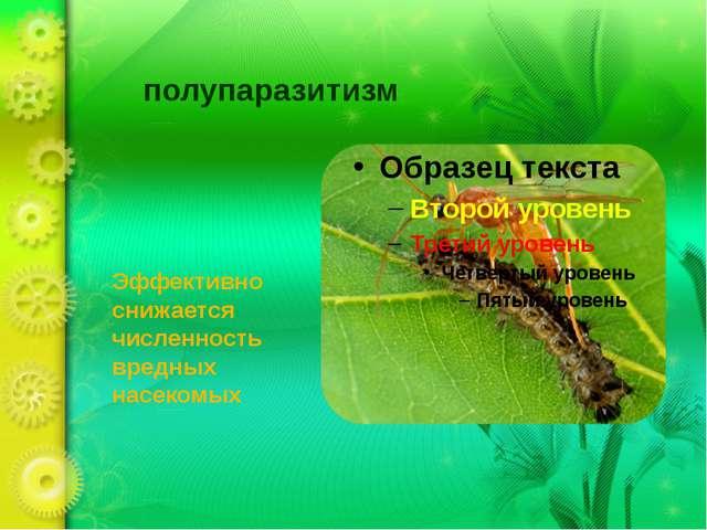 полупаразитизм Эффективно снижается численность вредных насекомых