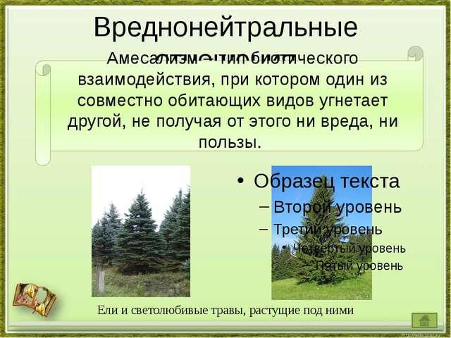 Вреднонейтральные отношения Ели и светолюбивые травы, растущие под ними Амеса...