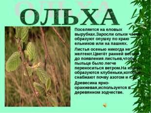Поселяется на еловых вырубках.Заросли ольхи часто образуют опушку по краю ель