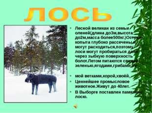 Лесной великан из семьи оленей(длина до3м,высота до2м,масса более500кг.)Остры