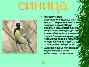 Название птиц возникло,очевидно,в связи с тем,что оперение имеет сине-голубую