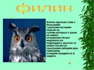 Филин-крупная сова с большими «ушными»пучками перьев на голове,которые к ушам
