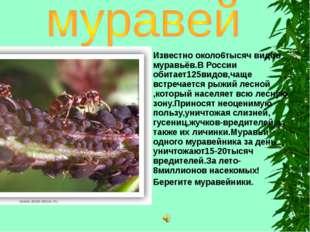 Известно около6тысяч видов муравьёв.В России обитает125видов,чаще встречается