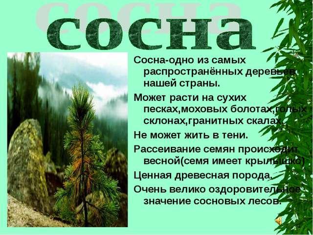 Сосна-одно из самых распространённых деревьев нашей страны. Может расти на су...