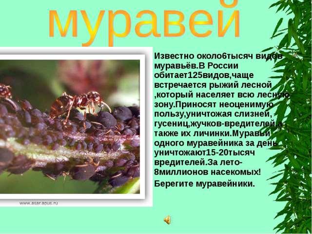 Известно около6тысяч видов муравьёв.В России обитает125видов,чаще встречается...