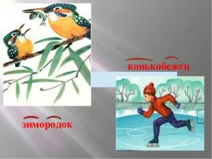 конькобежец зимородок