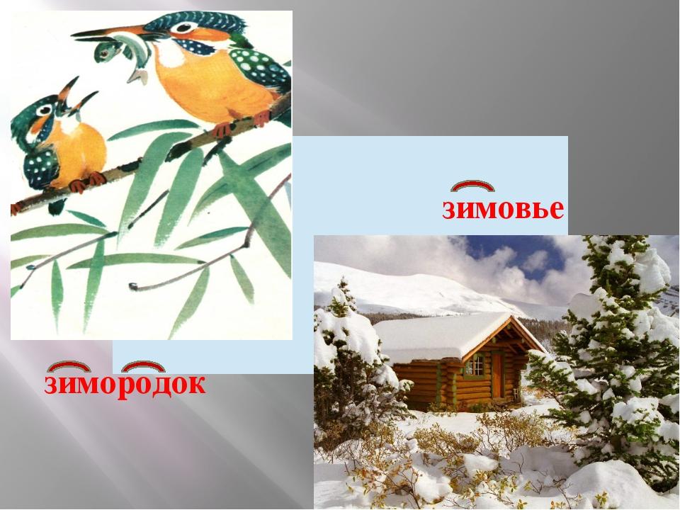 зимородок зимовье