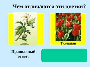 Чем отличаются эти цветки? Тюльпан Правильный ответ: У дурмана околоцветник д
