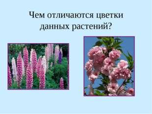 Чем отличаются цветки данных растений?