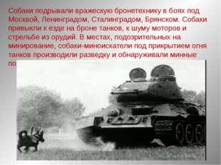 Собаки подрывали вражескую бронетехнику в боях под Москвой, Ленинградом, Стал