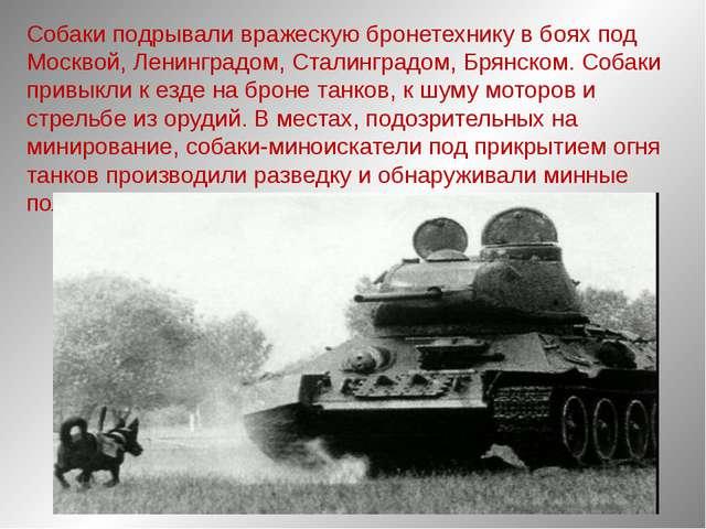 Собаки подрывали вражескую бронетехнику в боях под Москвой, Ленинградом, Стал...