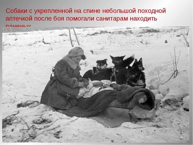 Собаки с укрепленной на спине небольшой походной аптечкой после боя помогали...