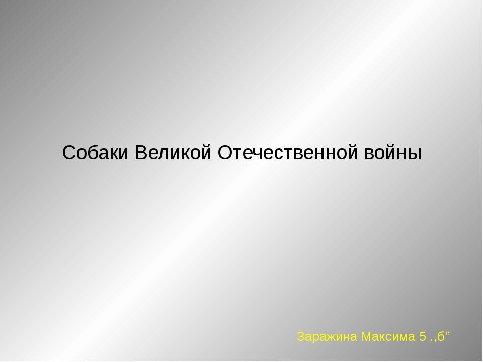 Собаки Великой Отечественной войны Заражина Максима 5 ,,б''