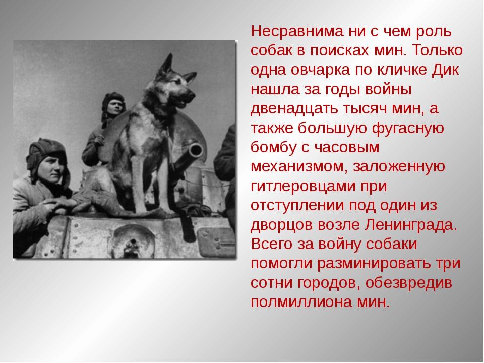 Несравнима ни с чем роль собак в поисках мин. Только одна овчарка по кличке Д...