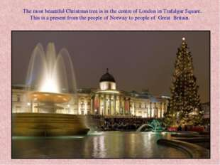 The most beautiful Christmas tree is in the centre of London in Trafalgar Sq