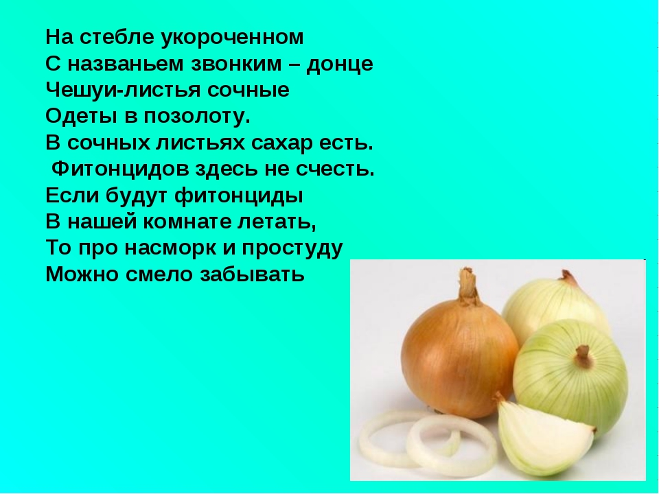 На стебле укороченном С названьем звонким – донце Чешуи-листья сочные Одеты в...