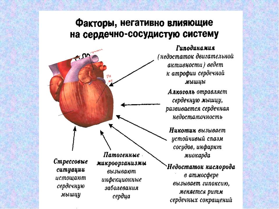 Профилактика болезней сердца и сосудов