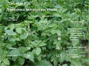 Динамика высоты растений Таблица 4 Сорта картофеляВысота растений (см) 20