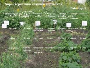 Характеристика клубней картофеля Таблица 5 №Названия сортовОкрас клубняФор