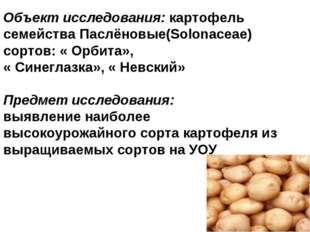 Объект исследования: картофель семейства Паслёновые(Solonaceae) сортов: « Орб