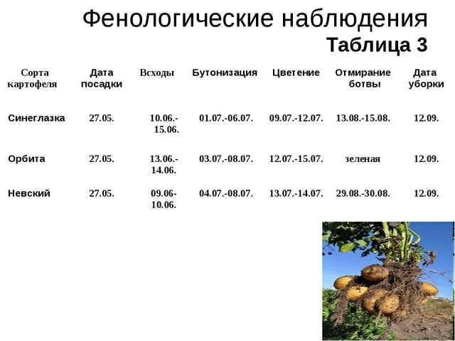 Таблица 3 Фенологические наблюдения Таблица 3 Сорта картофеляДата посадкиВс...