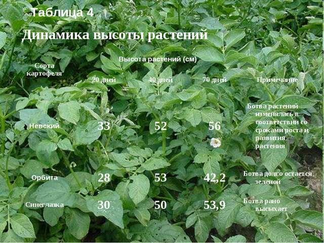 Динамика высоты растений Таблица 4 Сорта картофеляВысота растений (см) 20...