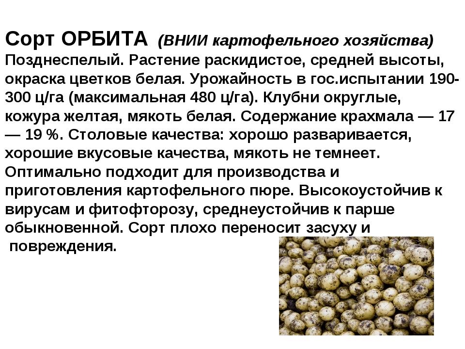 Сорт ОРБИТА (ВНИИ картофельного хозяйства) Позднеспелый. Растение раскидистое...