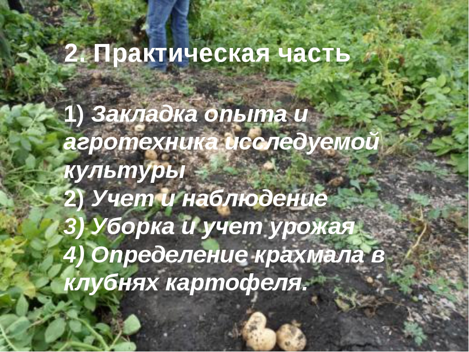 2. Практическая часть 1) Закладка опыта и агротехника исследуемой культуры 2...