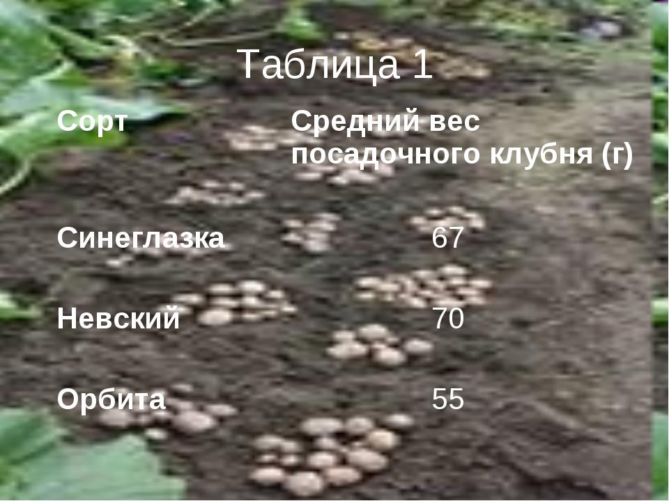 Таблица 1 СортСредний вес посадочного клубня (г) Синеглазка 67 Невский 70...
