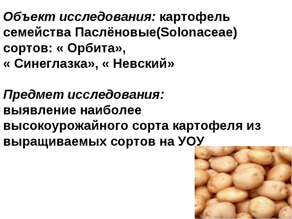 Объект исследования: картофель семейства Паслёновые(Solonaceae) сортов: « Орб...