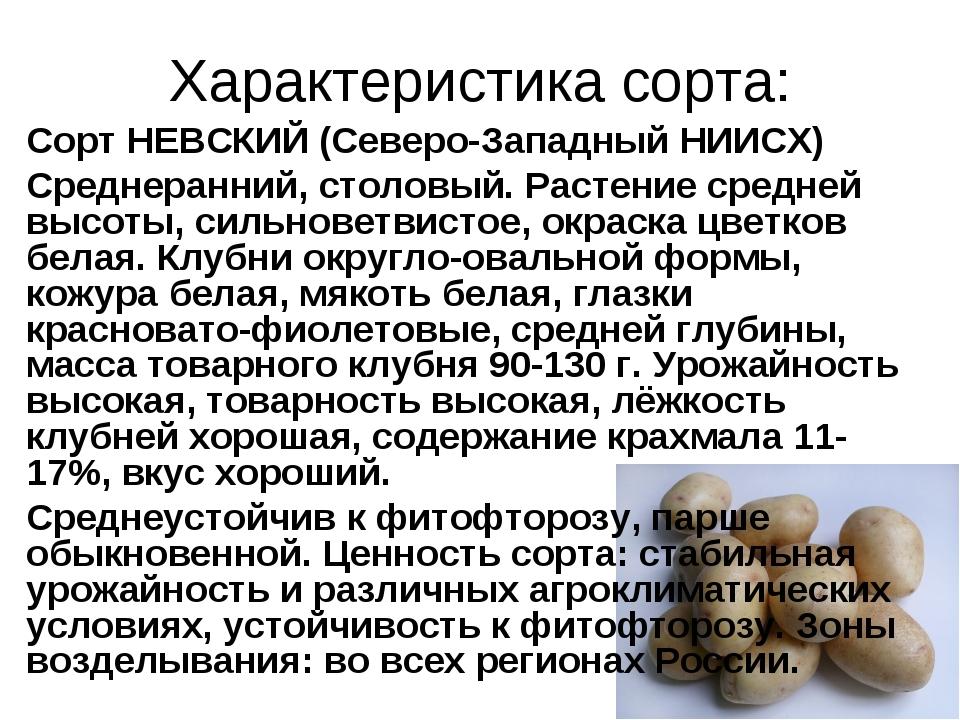 Характеристика сорта: Сорт НЕВСКИЙ (Северо-Западный НИИСХ) Среднеранний, стол...