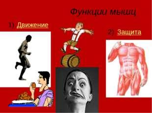 Функции мышц Движение Защита