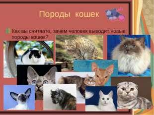 Породы кошек Как вы считаете, зачем человек выводит новые породы кошек?