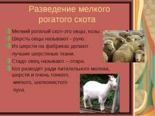 Разведение мелкого рогатого скота Мелкий рогатый скот-это овцы, козы. Шерсть