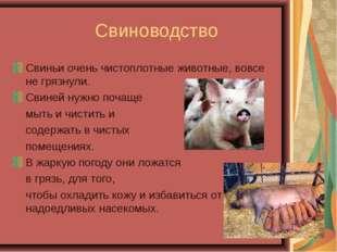 Свиноводство Свиньи очень чистоплотные животные, вовсе не грязнули. Свиней н