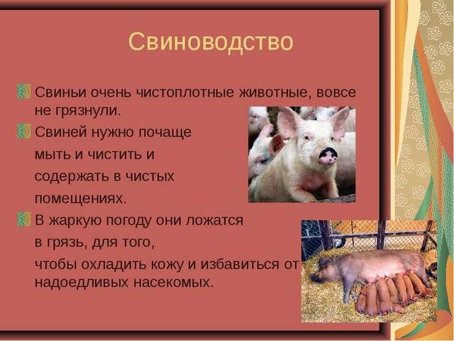 Свиноводство Свиньи очень чистоплотные животные, вовсе не грязнули. Свиней н...